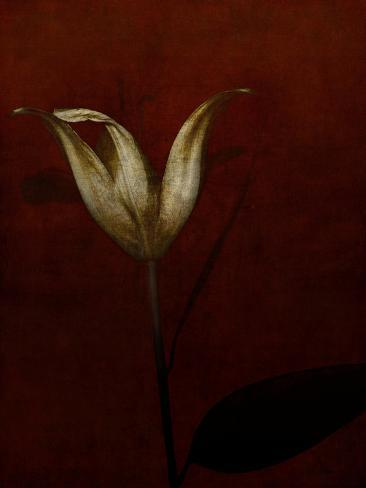 Lily Giclee Print
