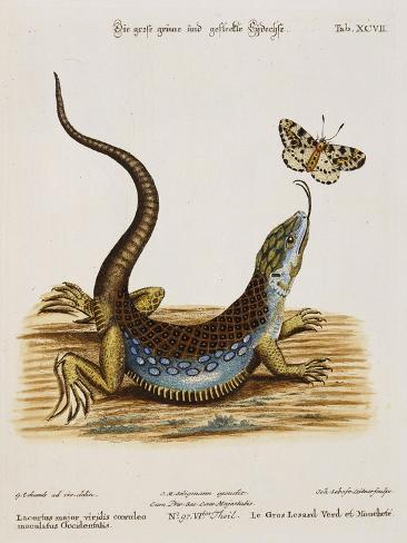 Lizard Chasing a Butterfly Giclee Print