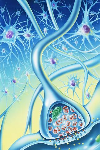 Nerve Synapse Photographic Print