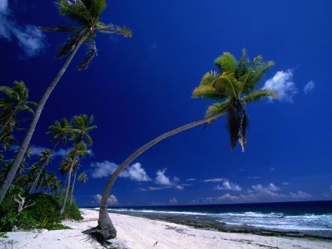 Bent Palm Tree on Beach, French Polynesia Photographic Print