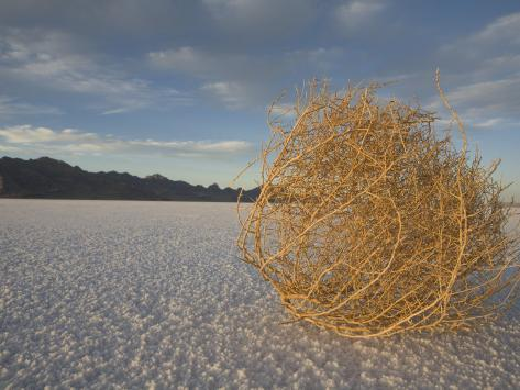 Tumbleweed on the Bonneville Salt Flats, Utah Photographic Print