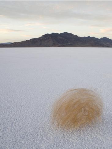 Tumbleweed Spinning over the Bonneville Salt Flats, Utah Photographic Print