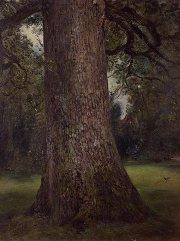 Study of the Trunk of an Elm Tree, circa 1821 Giclee Print