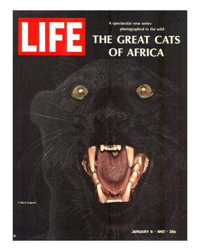 The Great Cats of Africa, Black Leopard, January 6, 1967 Photographic Print