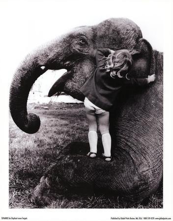 John Drysdale (An Elephant Never Forgets) Art Poster Print ...