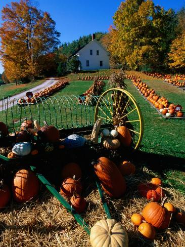 Pumpkin Patch Store, Pownal, Vermont Photographic Print