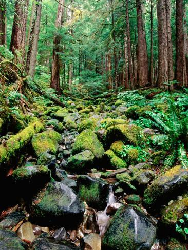 Rainforest in Sol Duc Rain Forest, Olympic National Park, Washington Photographic Print