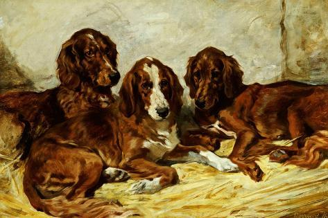 Shot and His Friends - Three Irish Red and White Setters, 1876 Giclee Print