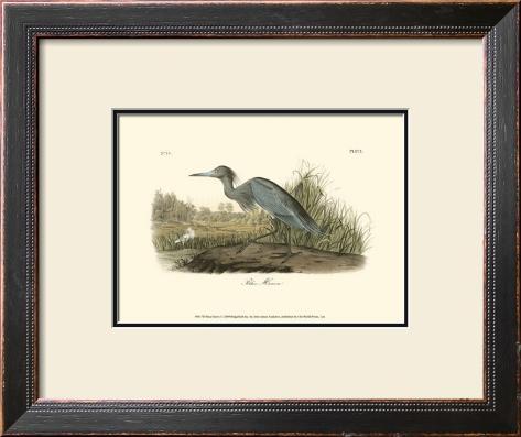 Blue Heron Framed Art Print