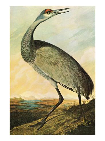 Sandhill Crane Art Print