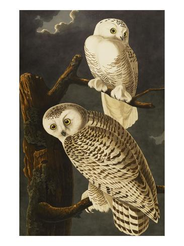 Snowy Owl (Nyctea Scandiaca), Plate Cxxi, from 'The Birds of America' Giclee Print