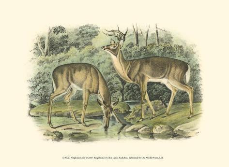 Virginian Deer Art Print