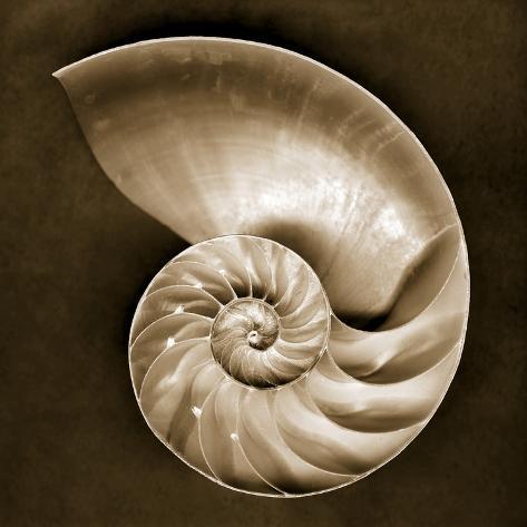 Half Nautilus Photographic Print