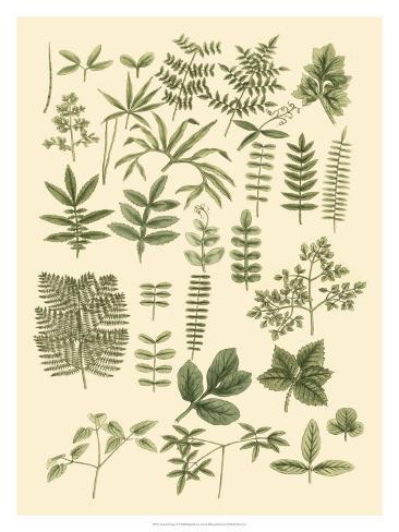 Abundant Foliage II Giclee Print