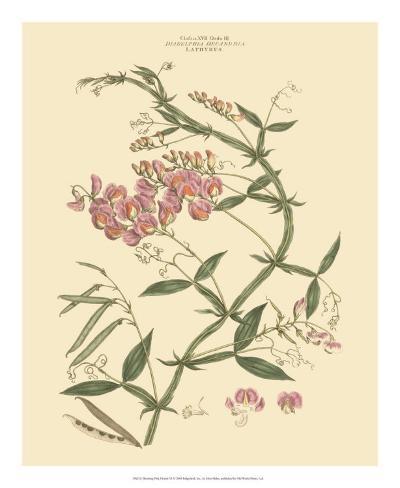 Blushing Pink Florals VI Giclee Print