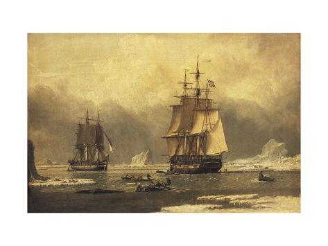 The 'Swan' and 'Isabella' Whaling in the Arctic Giclee Print