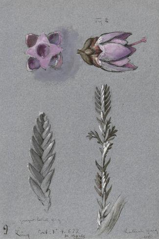 Four Studies of Ling Lámina giclée