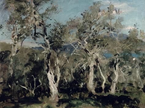 Olives, Corfu, 1912 Impressão giclée