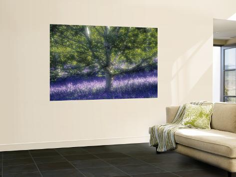 Bluebell and Silver Birch Wall Mural
