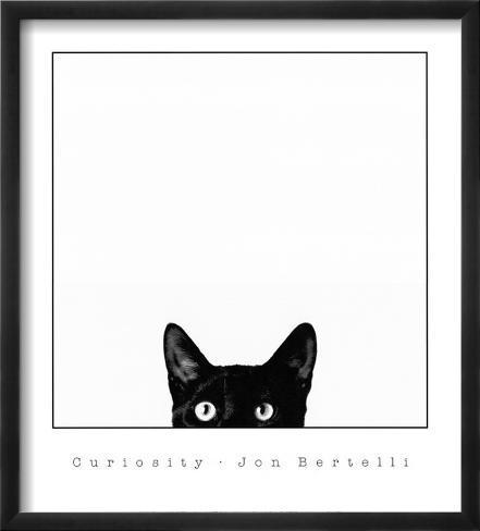 Nieuwsgierigheid, poster van kat met daarbij tekst: Curiosity Ingelijste kunstdruk