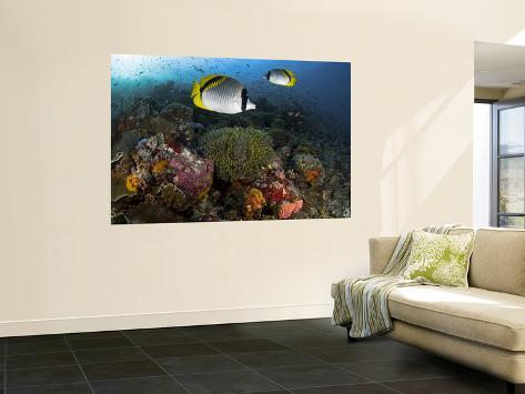 Lined butterflyfish swim over reef corals komodo national for Mural indonesia