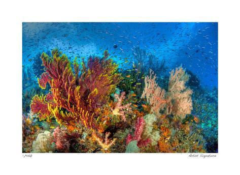 Reef Scenic 3 Giclee Print