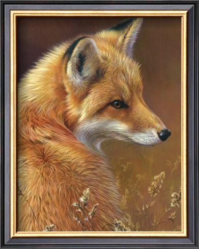 Curious: Red Fox Framed Art Print