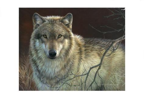Uninterrupted Stare: Gray Wolf Art Print