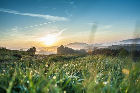 Sunrise Ovcer a Woodland in Saxony Switzerland Photographic Print