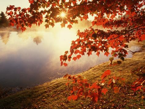 Sunrise Through Autumn Leaves Photographic Print