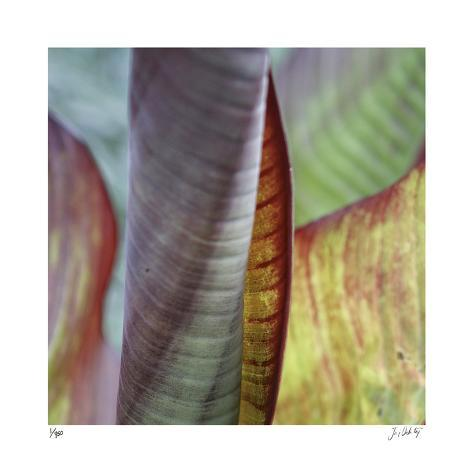 Banana Leaves IV Giclee Print