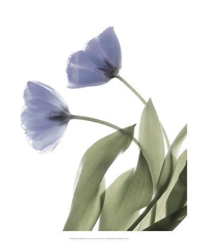 Xray Tulip III Taidevedos