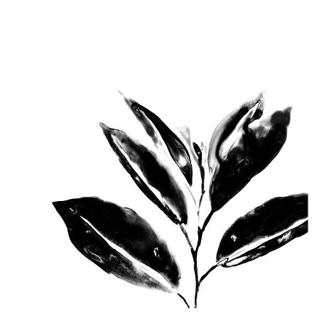 Monochrome Tropic IV Stampa giclée premium