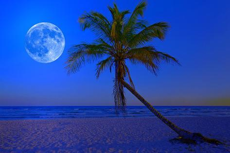 The Moon Shining in a Deserted Tropical Beach at Midnight with a Coconut Palm Tree in the Foregroun Photographic Print
