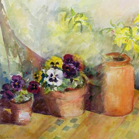Pansies and Terracotta Pots Stampa giclée