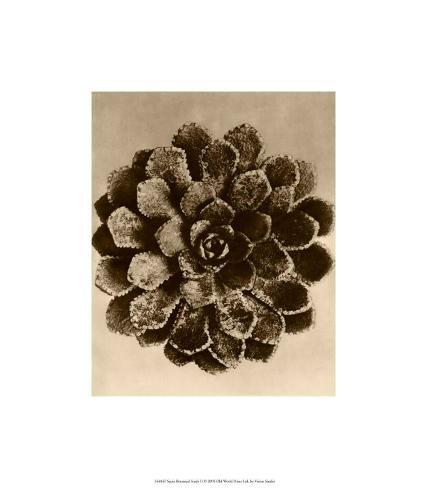 Sepia Botany Study II Premium Giclee Print