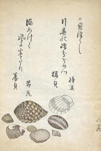 Shellfish Lámina giclée
