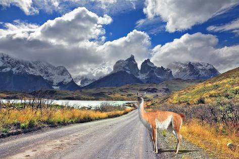 Neverland Patagonia. Lake Pehoe, Graceful Guanaco on Gravel Road. Away in the Clouds - the Cliffs O Photographic Print