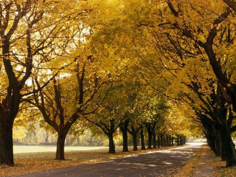 Maple Tree Grove in Park, WI Photographic Print