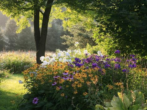 Summer Flower Adourn a Farm Garden Photographic Print