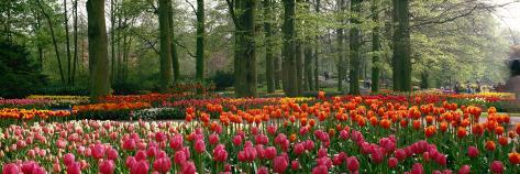 Keukenhof Garden, Lisse, the Netherlands Fotoprint