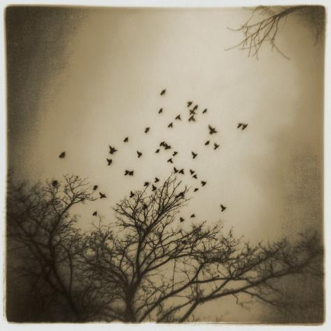 Birds and Trees, Discovery Park Photographic Print
