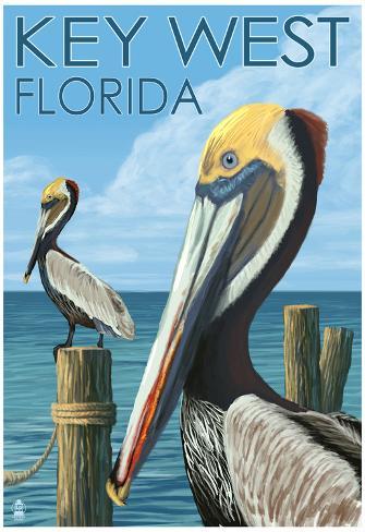 Pelican Fernandina Beach Florida