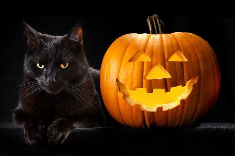 Halloween Pumpkin and Black Cat Scary Spooky and Creepy Horror Holiday Superstition Evil Animal And Photographic Print