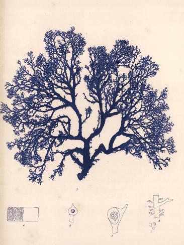 Blue Botanical Study I Premium Giclee Print