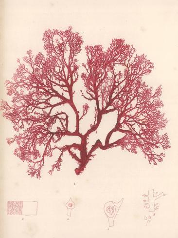 Red Botanical Study I Premium Giclee Print