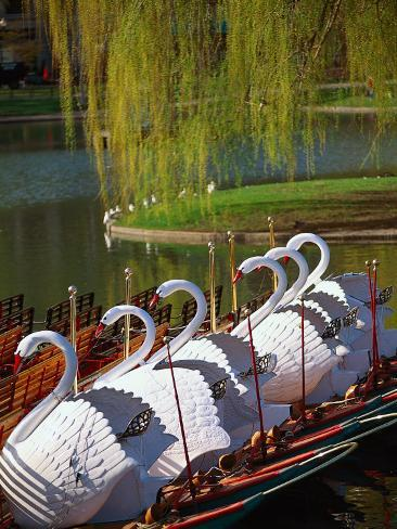 Swan Boats, the Public Garden, Boston, MA Photographic Print