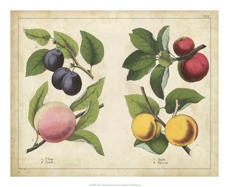 Kitchen Fruits I Giclée-vedos