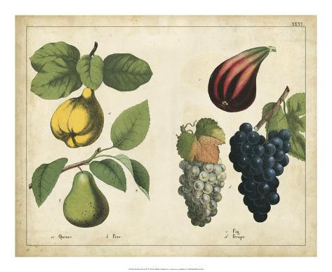 Kitchen Fruits IV Giclée-vedos