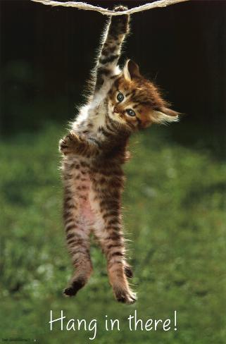 Cat Prints Uk